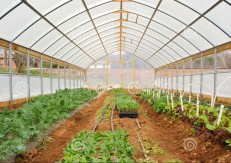 ایجاد شهرک گلخانه ای محصولات ارگانیک توسط مدیر عامل هتل فرشته پاسارگاد